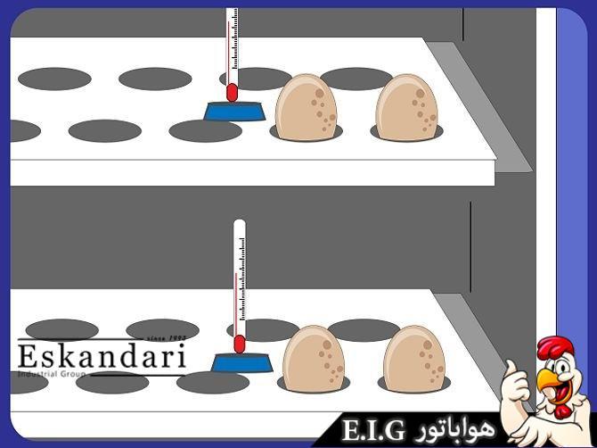 نحوه جوجهگیری از تخم بوقلمون در یک ماشین جوجهکشی