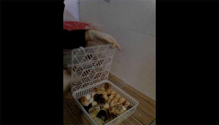 عکس های ارسالی آقای صادقی خریدار محترم دستگاه جوجه کشی از ارومیه
