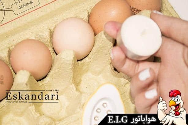 بررسی تخم نطفه دار