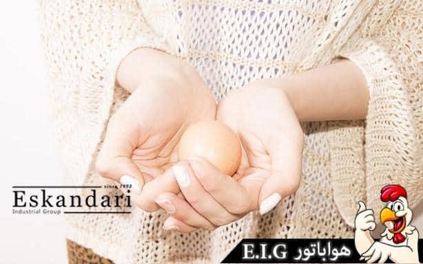 آموزش جوجه کشی از تخم مرغ