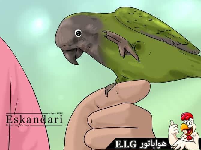 نگهداری طوطی سنگالی