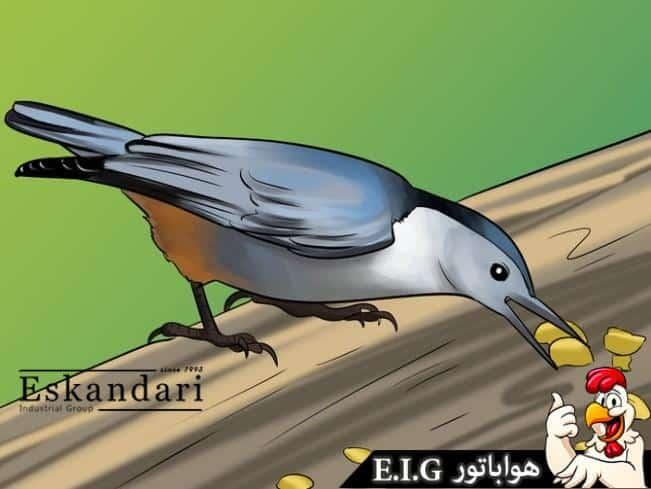 نگهداری پرندگان