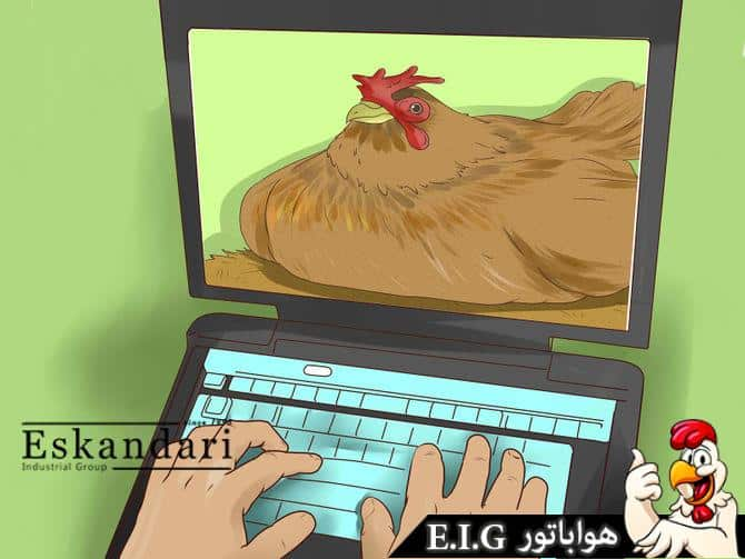 انواع نژاد های مرغ تخم گذار