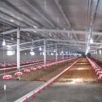 تهیه نور مطلوب در لانه مرغ های تخمگذار