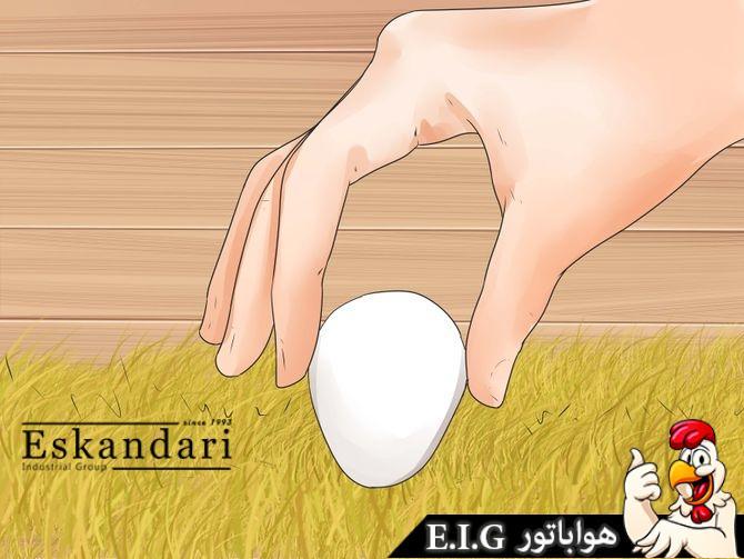 مراقبت از تخم های نطفه دار در جوجه کشی