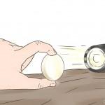 تفسیر نتایج حاصل از شکستن تخم مرغ های هچ نشده
