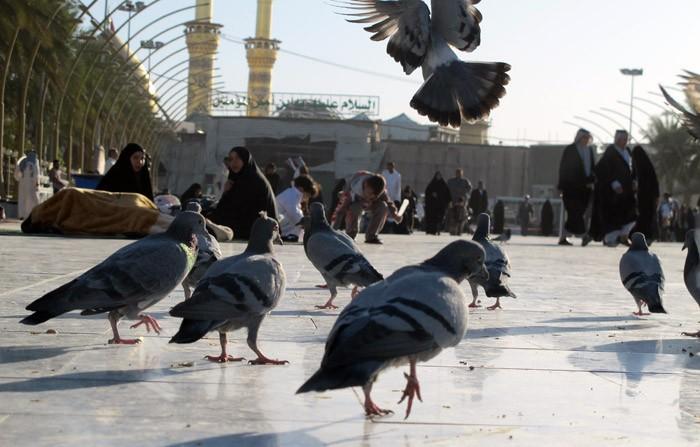 غذا دادن به کبوتر