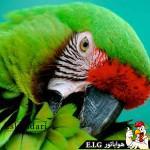 پرنده ای به نام طوطی سبز طوطی بخش اول