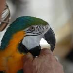 طوطی سبز : آموزش های لازم برای نگهداری طوطی سبز