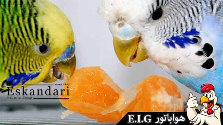 مرغ-عشق