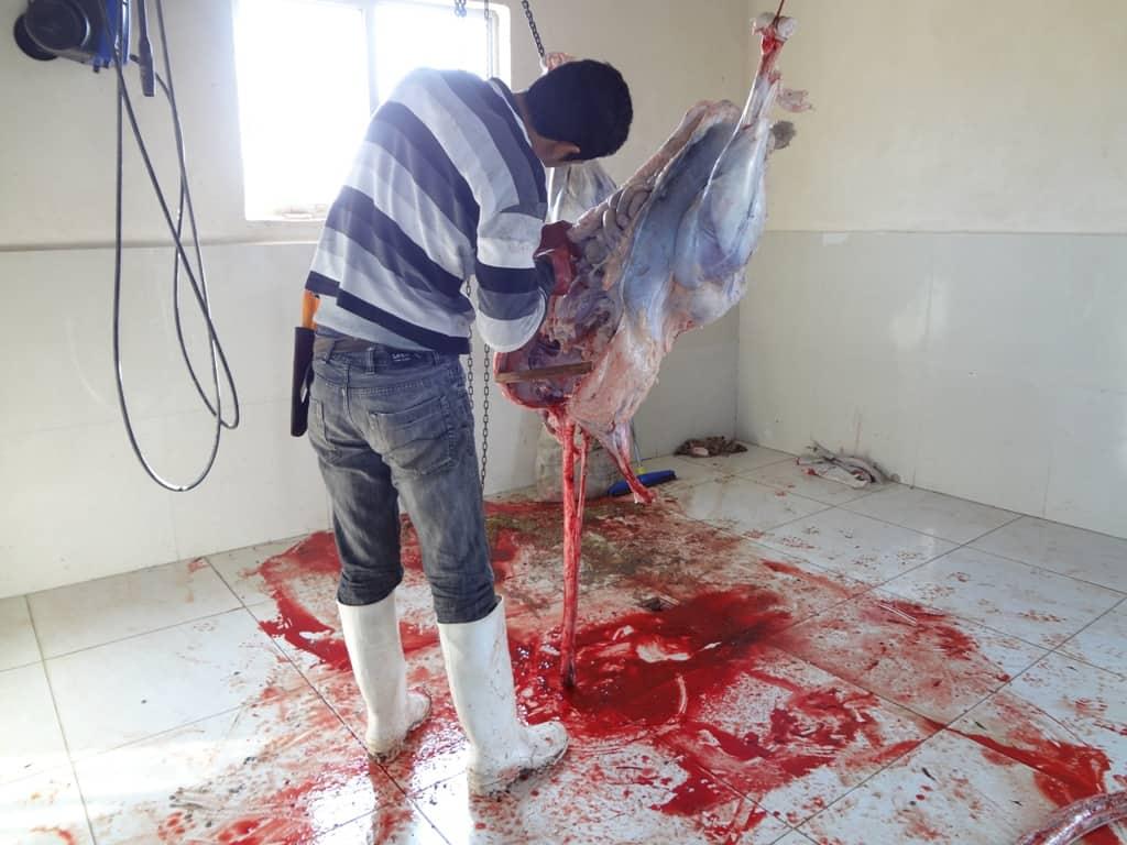 کشتار شترمرغ