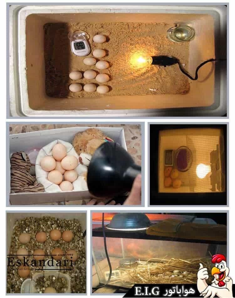 آموزش کار با دستگاه جوجه کشی - home-incubation