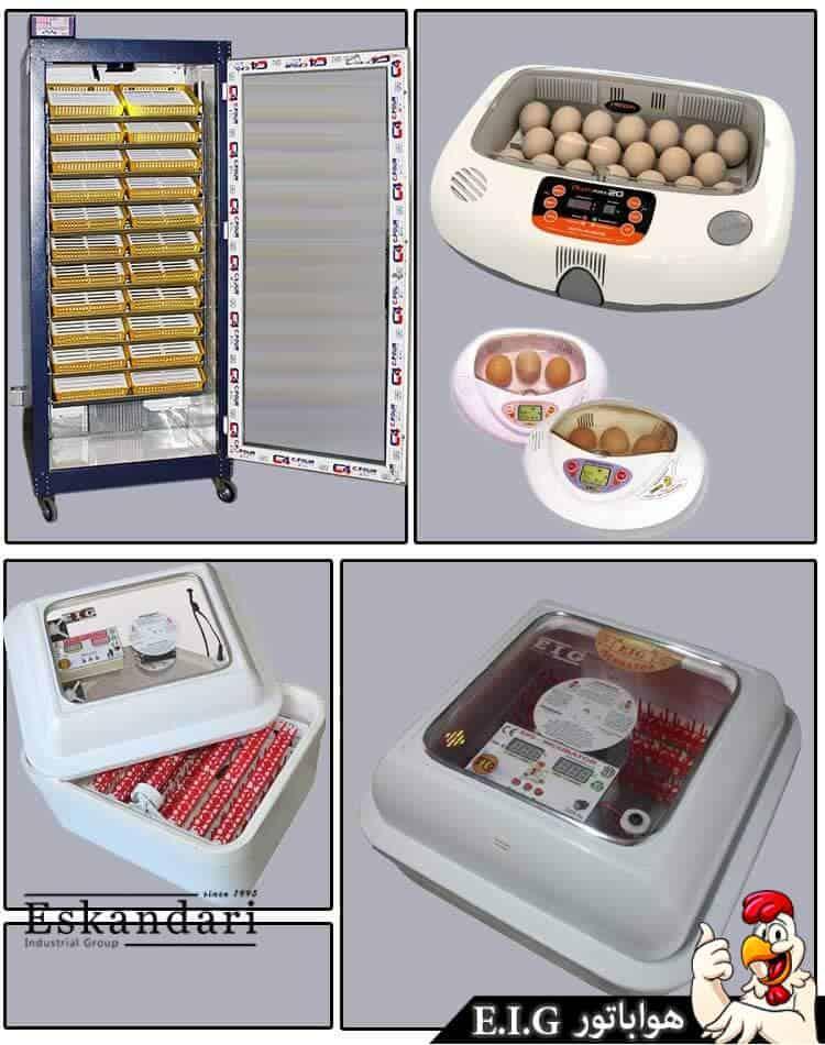 آموزش کار با دستگاه جوجه کشی - industrial-incubation
