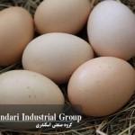 چگونه قیمت تخم مرغ بالا می رود در حالیکه قیمت جوجه ها رو به کاهش است؟
