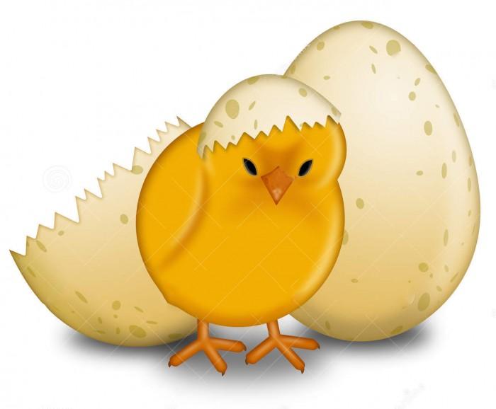 جوجه خارج شده از تخم نطفه دار