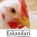 نژاد های مرغ گوشتی و اصلاح نژاد در آن ها