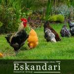 نکات افزایش بازدهی جوجه کشی در مرغ و خروس – 3