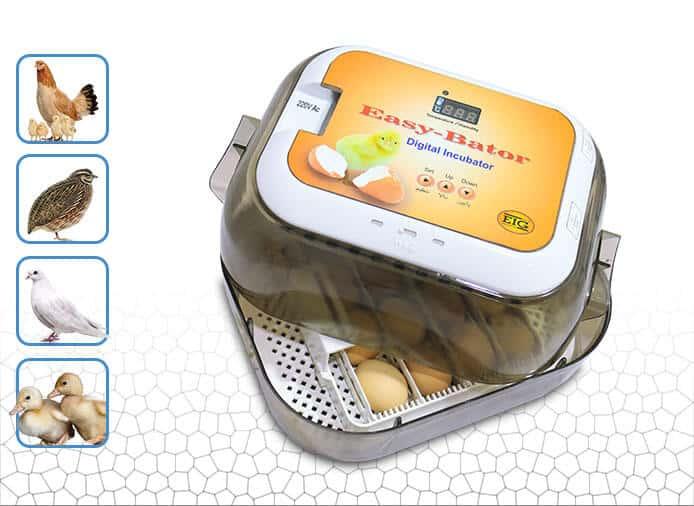 دستگاه جوجه کشی خانگی ارزان ایزی باتور 5