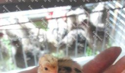 قفس-بلدرچین---کبک---مرغ