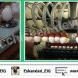 انتخاب تخم مرغ مناسب جوجه کشی   جمع آوری تخم مرغ