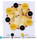 راهنمای مدیریت عمومی و تغذیه مرغ تخمگذار بخش اول