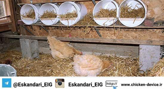 قفس مرغ بومی - پرورش مرغ بومی
