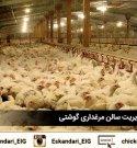 نکات کلیدی در بهبود مدیریت سالن مرغداری گوشتی