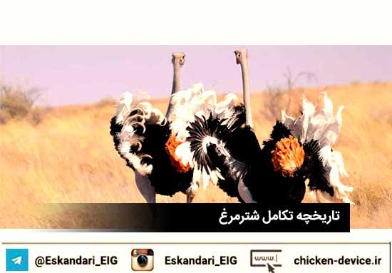 تاریخچه تکامل شترمرغ در کشور