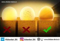 مدیریت تخم ها نطفه دار در جوجه کشی
