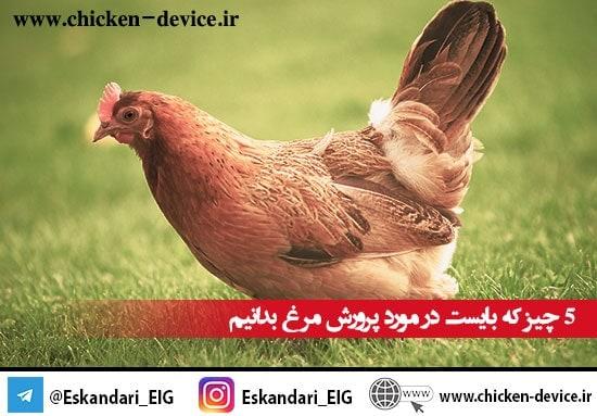 5 چیز که بایست در مورد پرورش مرغ بدانیم