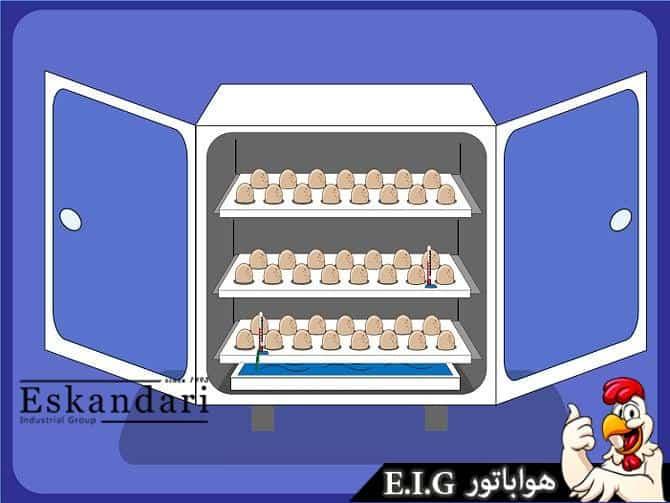 جوجهگیری از تخم بوقلمون 6