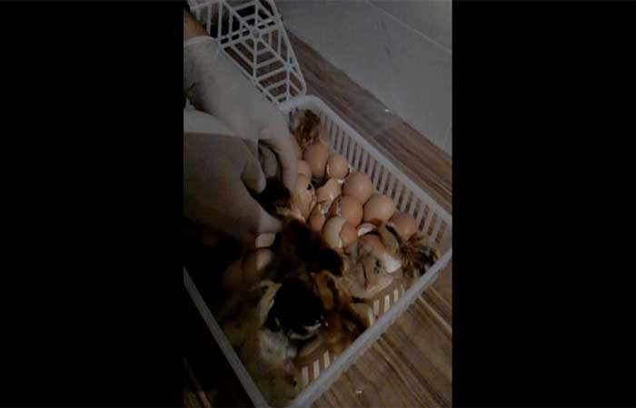 incubation-924-3