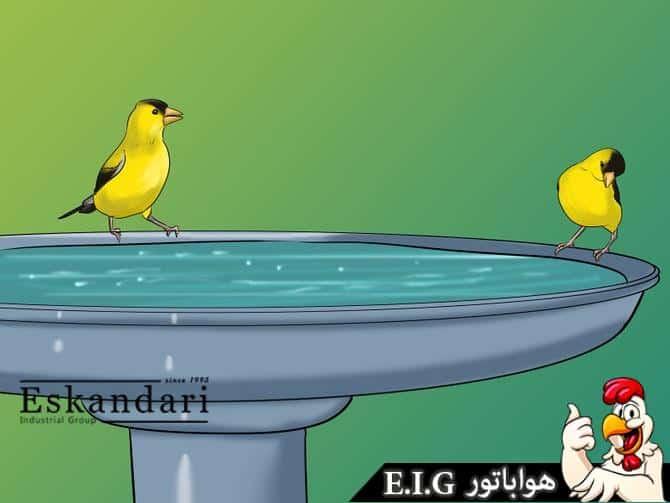 آب خوری پرندگان
