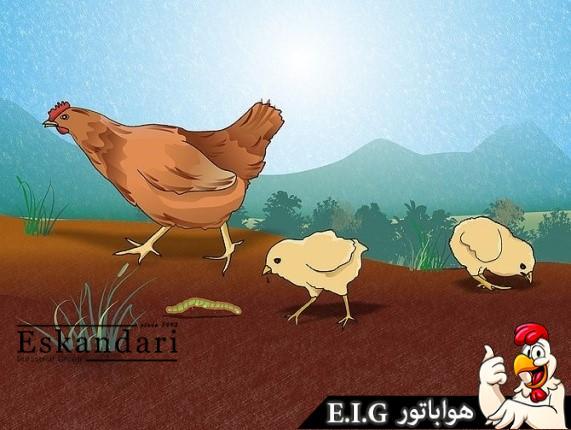 بیماری پرندگان مرغ