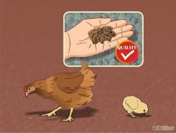 بیماری پرندگان