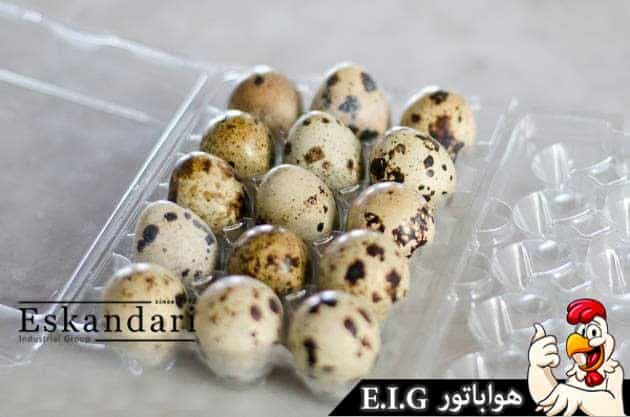 تخم-بلدرچین-چیست