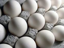مراقبت از تخم مرغ