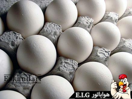 مراقبت از تخم مرغ (2)