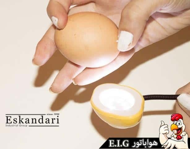 اموزش بررسی تخم نطفه دار