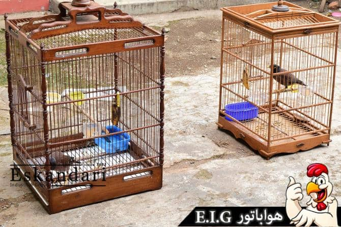 670px-Introduce-Two-Birds-to-Each-Other-Step-2