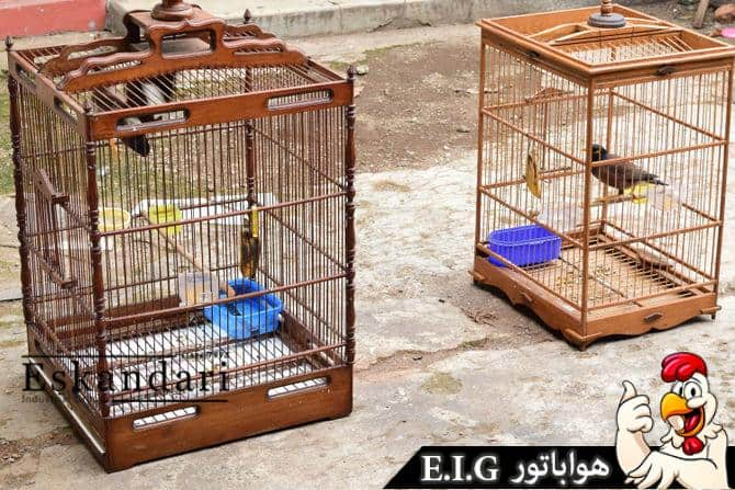 670px-Introduce-Two-Birds-to-Each-Other-Step-3