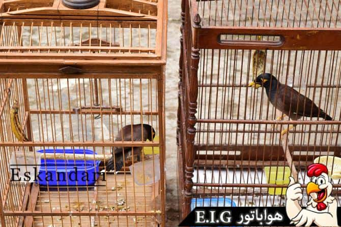 670px-Introduce-Two-Birds-to-Each-Other-Step-4