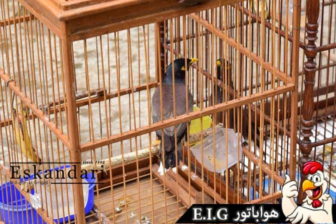 670px-Introduce-Two-Birds-to-Each-Other-Step-5