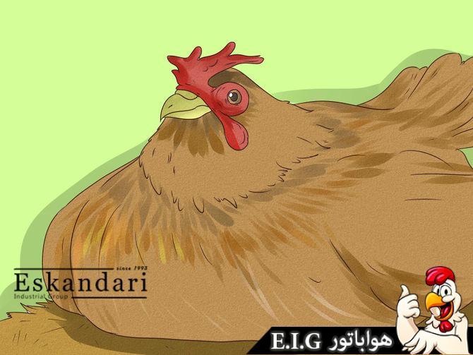 افسردگی در مرغ