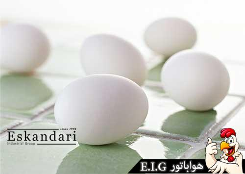 کیفیت-تخم-مرغ