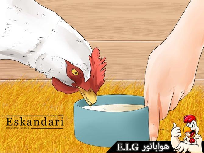 جلوگیری از شکستن تخم توسط مرغ