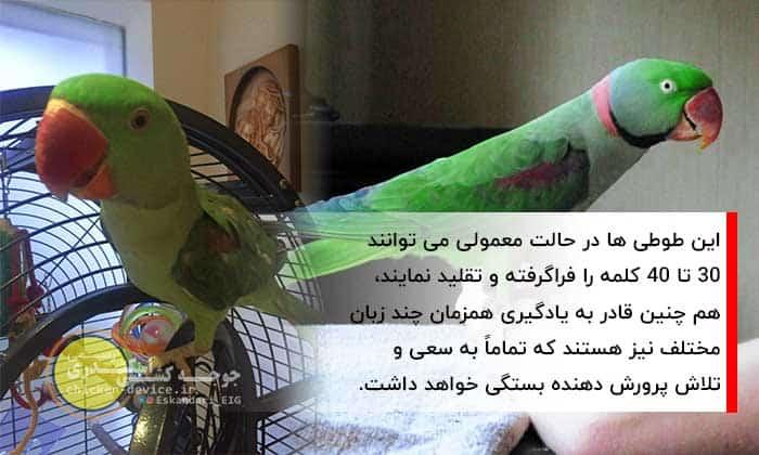 آموزش تقلید صدای طوطی سبز