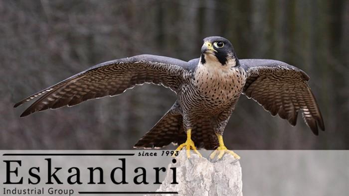 پرنده شکاری شاهین