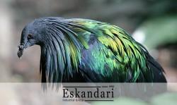 تاریخچه کبوتر