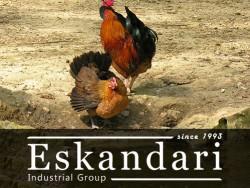 مرغ و خروس خانگی